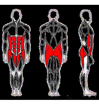 Pilvo raumenų treniruoklis SM114 | 2