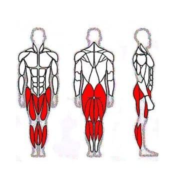 Kojų raumenų treniruoklis SM203-T | 2