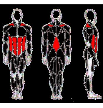 Pilvo raumenų treniruoklis SMP125.1 | 2